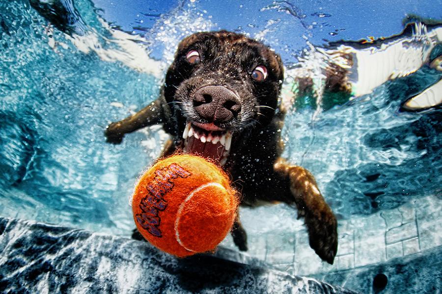 myfacemood - Foto Peloso sott'acqua