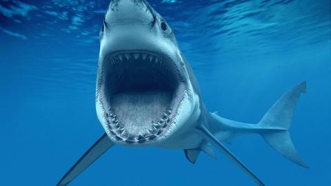 Messico: un video riprende uno squalo bianco che sfonda la gabbia di protezione