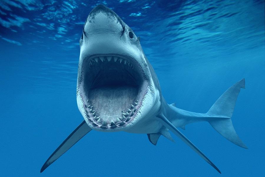 Myfacemood - Messico video riprende uno squalo bianco che sfonda la gabbia di protezione