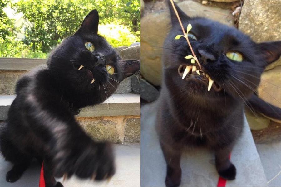 Myfacemood - Scimmietta il gatto vampiro