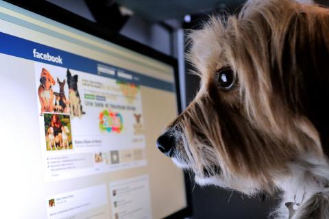 """Facebook aggiungerà l'opzione di segnalazione per le """"notizie false""""!"""