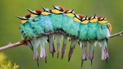 Illusioni ottiche dal mondo della natura!