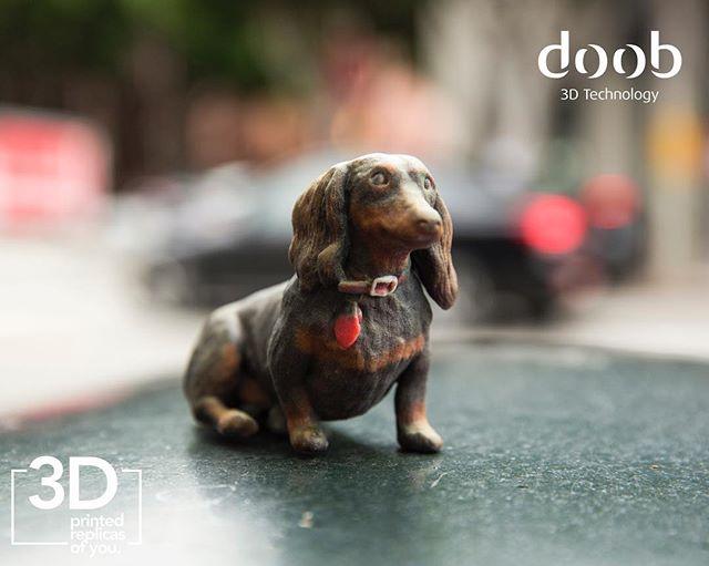 Doob dog