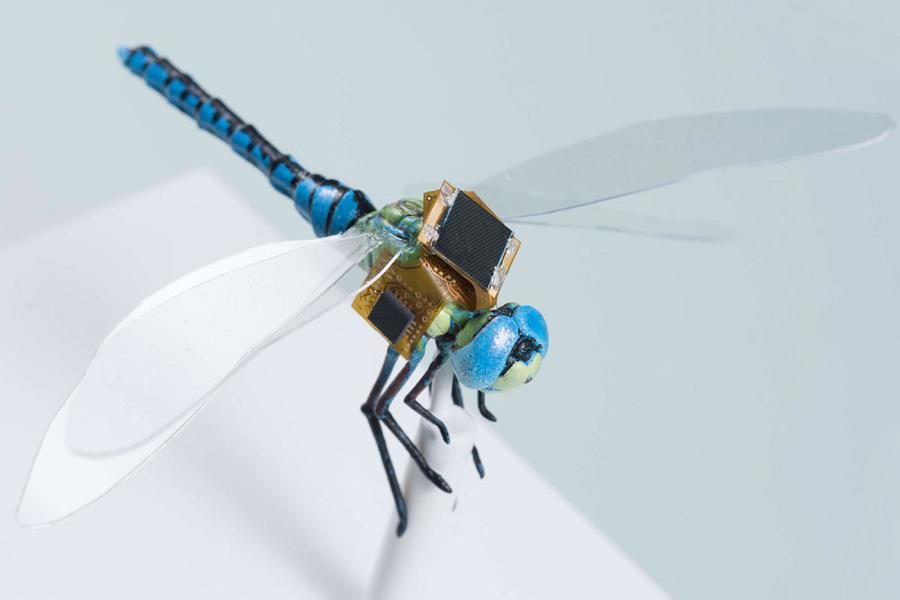 Libellule Cyborg potrebbero essere usate come sistemi di sorveglianza