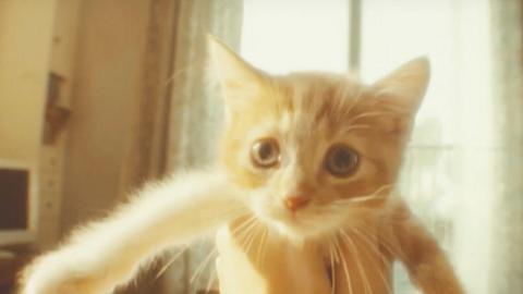 """In Gravity Rush 2, c'è il gattino """"volante"""" più simpatico del mondo!"""