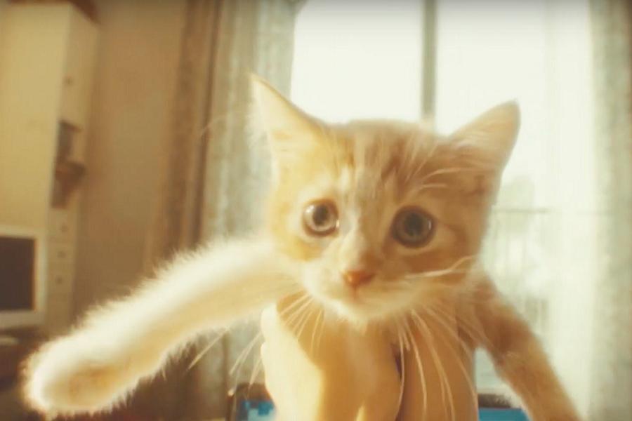 """Myfacemood - In Gravity Rush 2 c'è il gatto """"volante"""" più simpatico del mondo"""