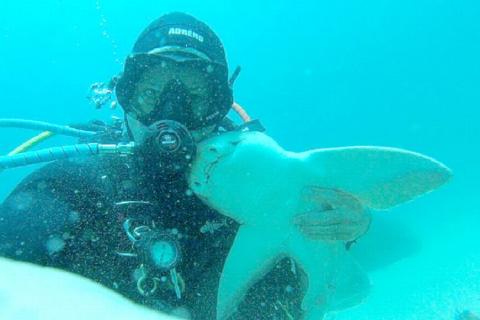 Incredibile: lo squalo vuole le coccole dal suo amico sub!
