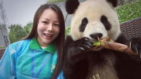 Questo panda ha talento per i selfie!