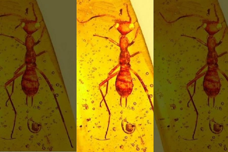 Myfacemood - Scoperto un insetto Alieno vecchio 100 milioni di anni
