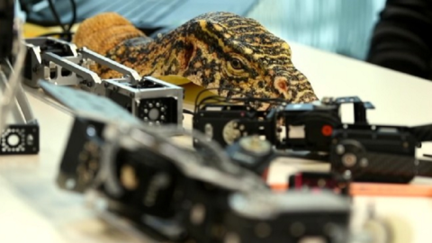 """BBC: """"Spy in the Wild"""" filma con dei robot-rettili la natura selvaggia"""