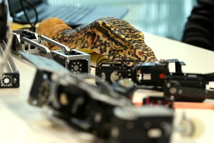 Myfacemood - BBC Spy in the Wild filma con dei robot la natura selvaggia