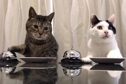 Due gattini molto intelligenti ed affamati! ?