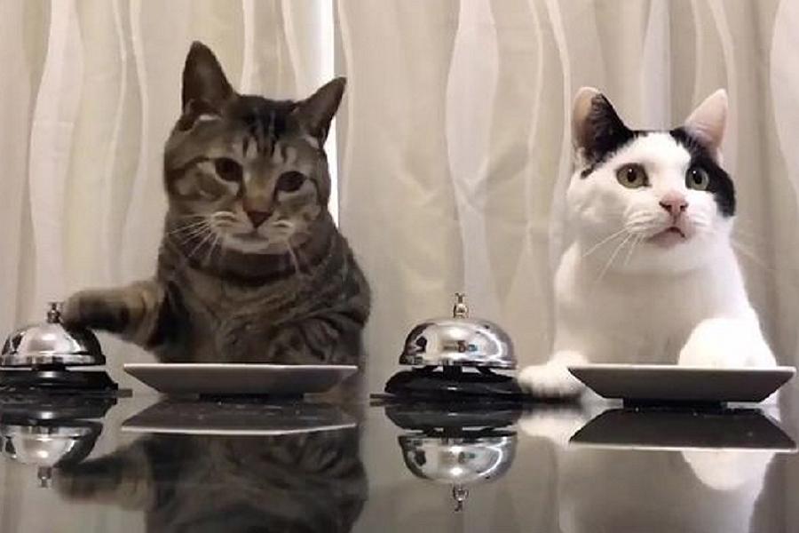 Myfacemood - Due gattini molto intelligenti ed affamati!