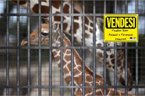 Ti piacerebbe comprare uno Zoo? Adesso puoi!🐘🐊🦁