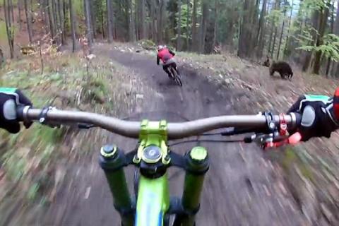 Top Bike Park: Ciclista viene inseguito da un orso. Se la cava per un soffio!