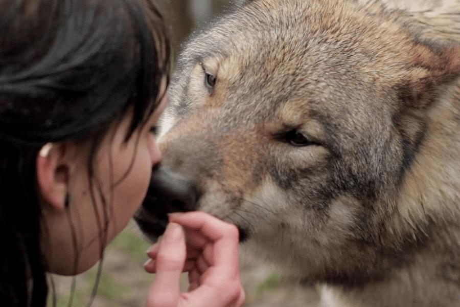 L'amore dei lupi