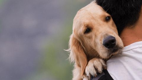 Perchè i cani ci amano così tanto? Le ragioni si trovano nel DNA! ?