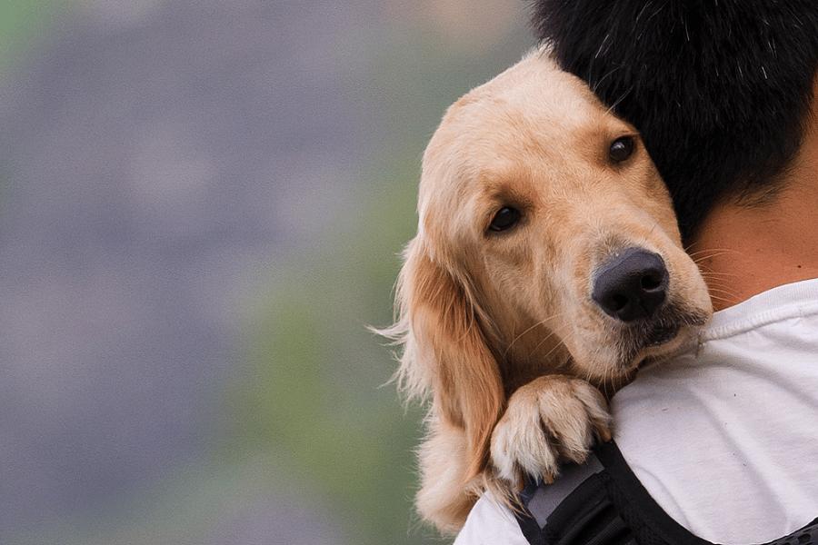 Myfacemood - Perchè i cani ci amano così tanto Le ragioni si trovano nel DNA!